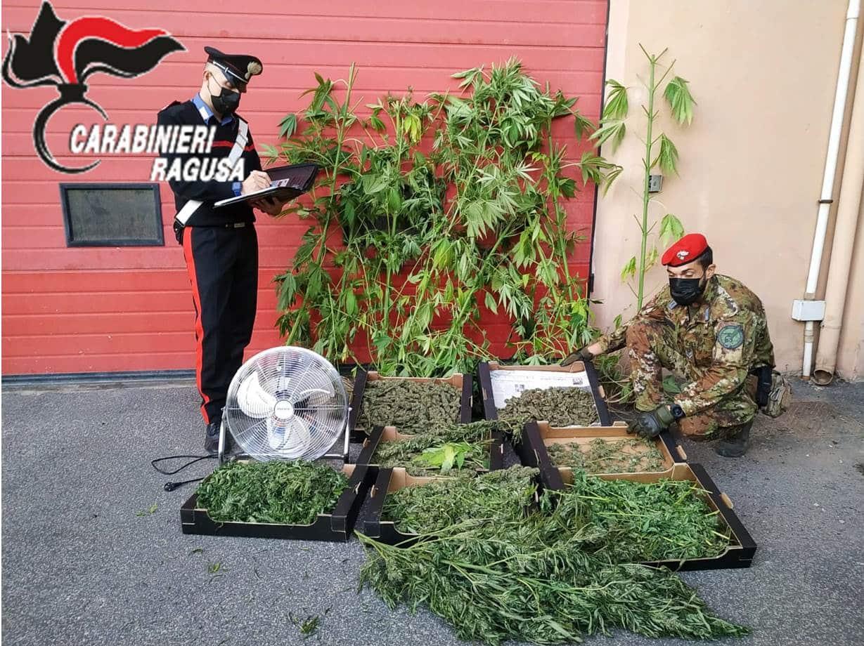 Agricoltore trovato in possesso di ingente quantitativo di marijuana: arrestato