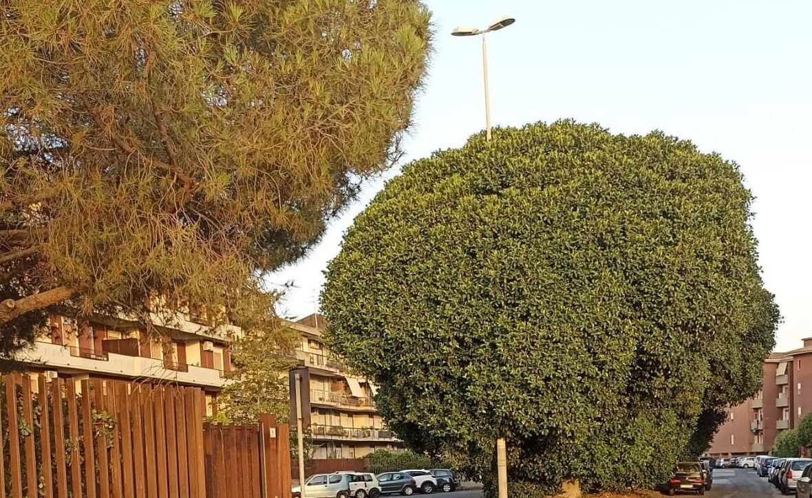 Illuminazione e verde urbano trascurato, il caso di un quartiere di Catania e l'impegno della IV Municipalità