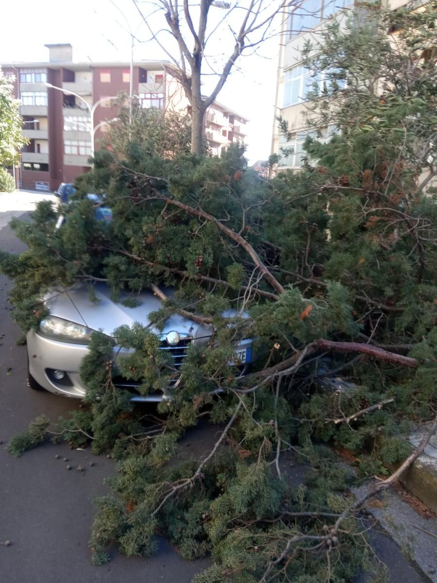 albero caduto via adone (1)