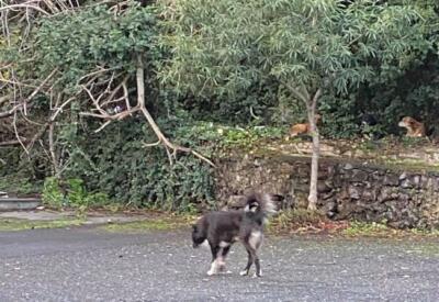 Cani randagi nel quartiere Borgo-Sanzio