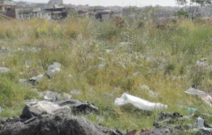 aree verdi e immobili abbandonati a catania dove proliferano i topi (3)