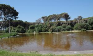 boschetto plaia (3)