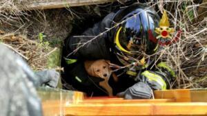 Cuccioli di cane precipitano in pozzo artesiano: pompieri intervengono nel sito archeologico e li salvano