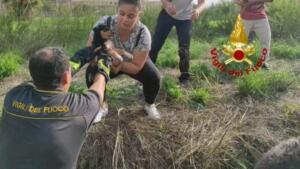 Cuccioli di cane precipitano in pozzo artesiano: pompieri intervengono nel sito archeologico e li salvano 2