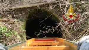 Cuccioli di cane precipitano in pozzo artesiano: pompieri intervengono nel sito archeologico e li salvano 3