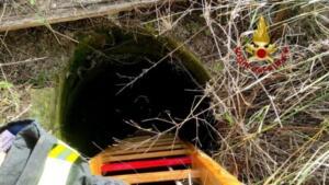 Cuccioli di cane precipitano in pozzo artesiano: pompieri intervengono nel sito archeologico e li salvano 4