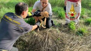 Cuccioli di cane precipitano in pozzo artesiano: pompieri intervengono nel sito archeologico e li salvano 5