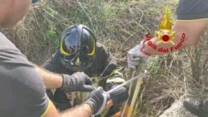 Cuccioli di cane precipitano in pozzo artesiano: pompieri intervengono nel sito archeologico e li salvano 6