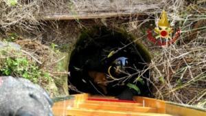 Cuccioli di cane precipitano in pozzo artesiano: pompieri intervengono nel sito archeologico e li salvano 7