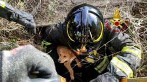 Cuccioli di cane precipitano in pozzo artesiano: pompieri intervengono nel sito archeologico e li salvano 8