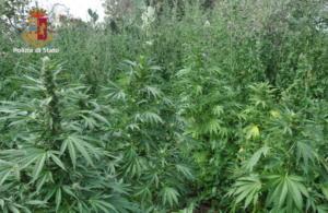 Piantagione di marijuana ad Adrano